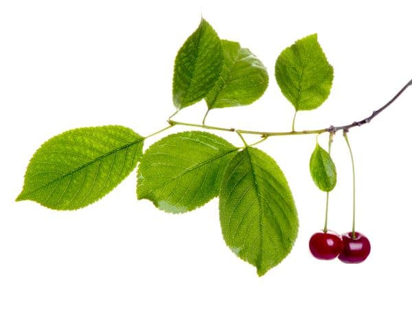 Cerises-How-Do-You-Say-Cherries-In-French