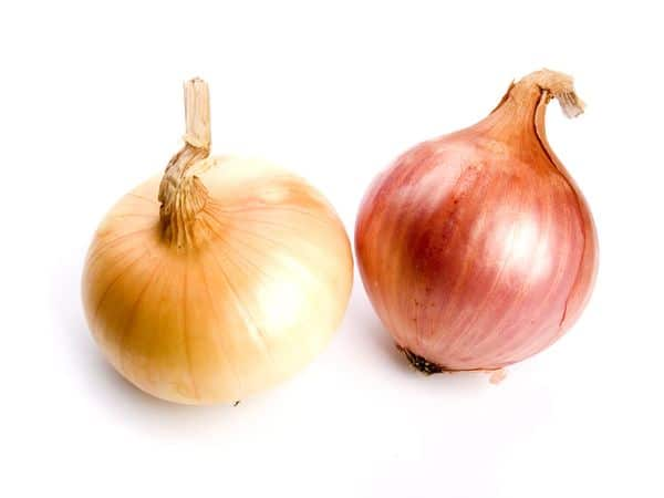 Cipolle-How-To-Say-Onions-In-Italian