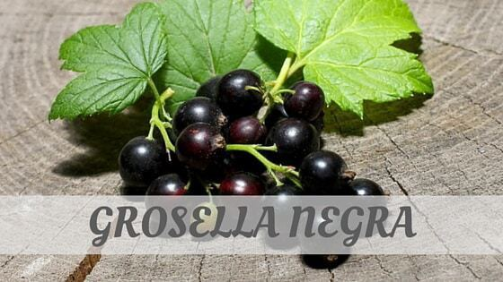 How Do You Pronounce Grosella Negra?