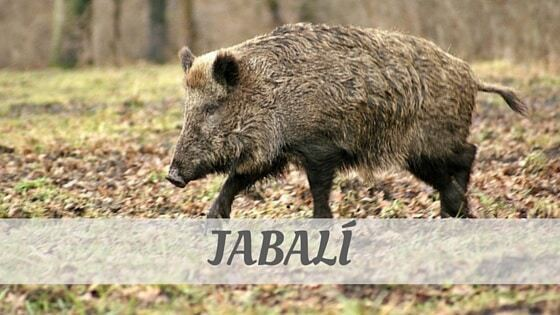 How To Say Jabalí