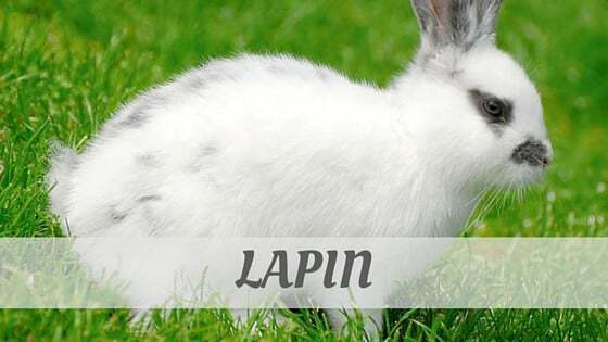 How To Say Lapin?