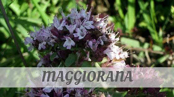 How Do You Pronounce Maggiorana?