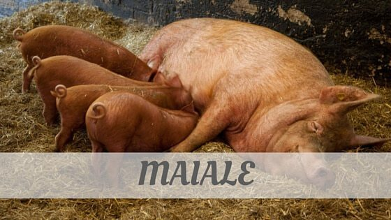 How Do You Pronounce Maiale?