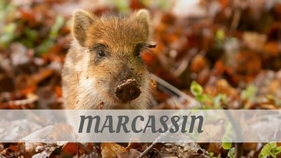 How To Say Marcassin?
