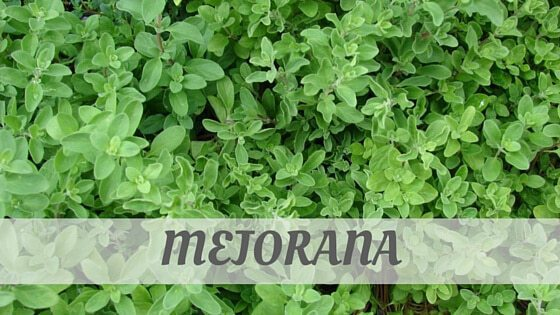 How Do You Pronounce Mejorana?