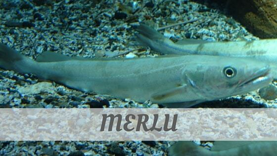 How Do You Pronounce Merlu?