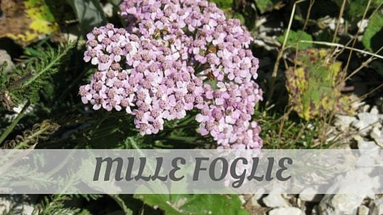 How To Say Mille Foglie?