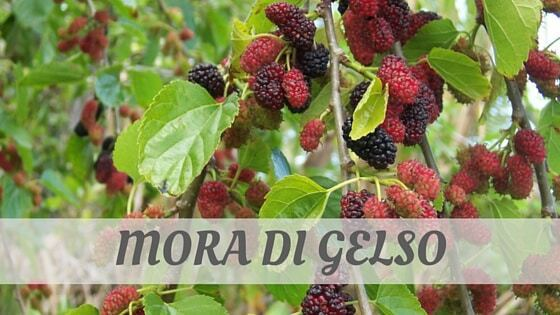 How Do You Pronounce Mora Di Gelso?