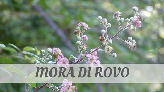 How Do You Pronounce Mora Di Rovo?