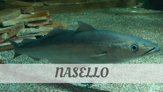 How Do You Pronounce Nasello?