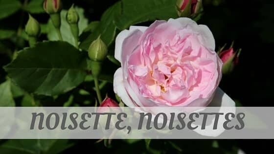 How To Say Noisette, Noisettes?