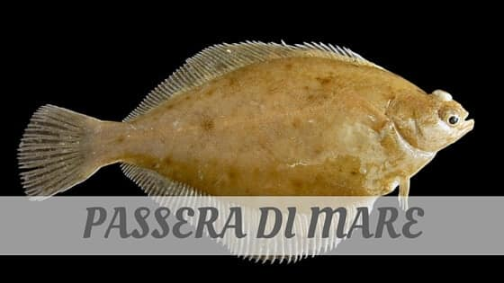 How To Say Passera Di Mare?