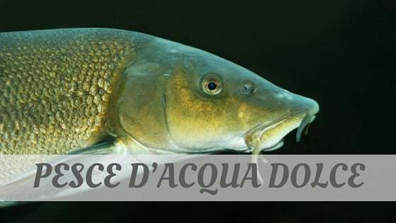 How Do You Pronounce Pesce D'acqua Dolce?