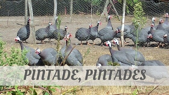 How Do You Pronounce Pintade, Pintades?