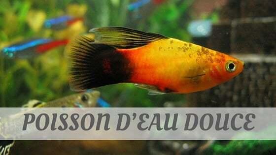 How To Say Poisson D'Eau Douce