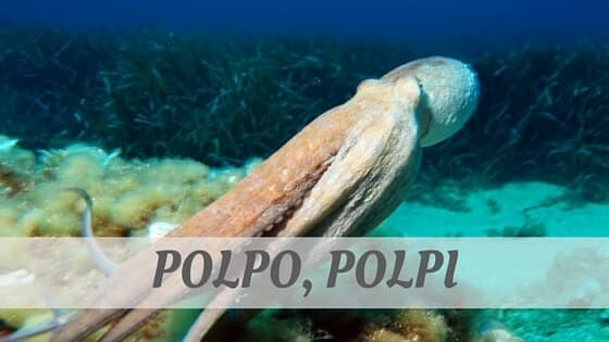 How Do You Pronounce Polpo, Polpi?