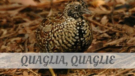 How To Say Quaglia