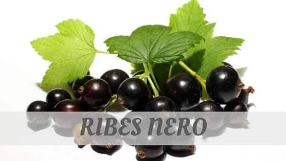 How Do You Pronounce Ribes Nero?