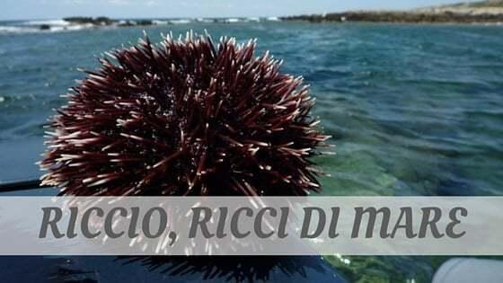 How Do You Pronounce Riccio, Ricci Di Mare?