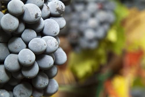 How Do You Pronounce Sangiovese?