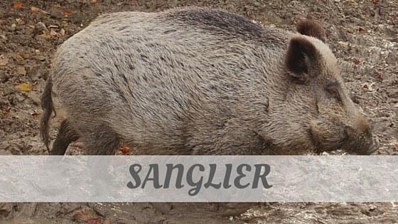 How Do You Pronounce Sanglier?