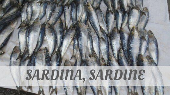 How To Say Sardina