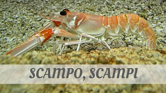 How Do You Pronounce Scampo, Scampi?