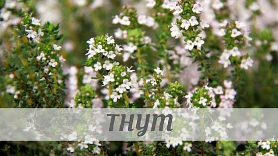 How To Say Thym?