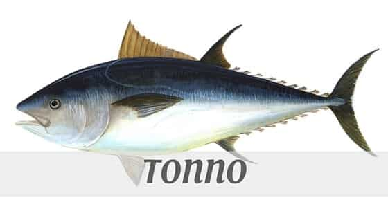 How To Say Tonno