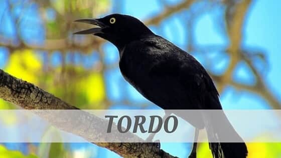 How Do You Pronounce How To Say Tordo?