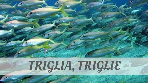How Do You Pronounce How To Say Triglia, Triglie?