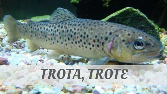 How Do You Pronounce How To Say Trota, Trote?