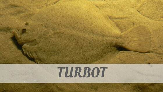 How To Say Turbot?