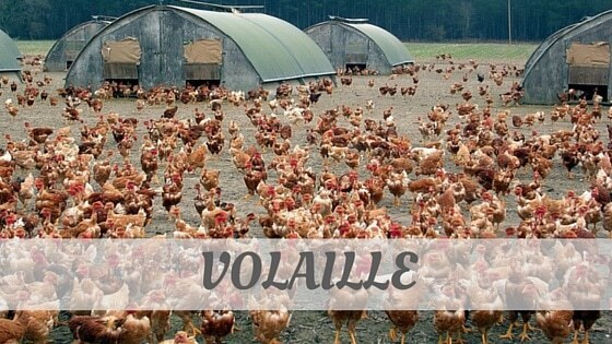 How Do You Pronounce Volaille?