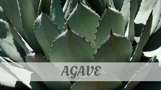 How Do You Pronounce Agave?