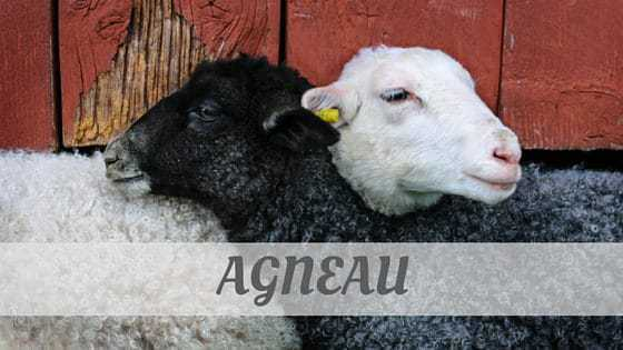 How To Say Agneau?
