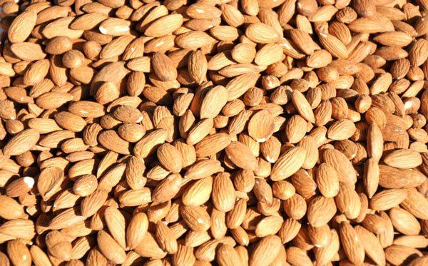 almendras, mandorle, almonds