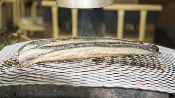 anguil, anguilles, anguilla