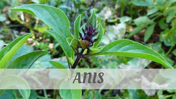 Anis (French)
