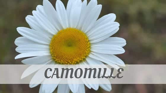 How Do You Pronounce Camomille?