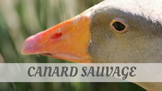 How Do You Pronounce Canard Sauvage?