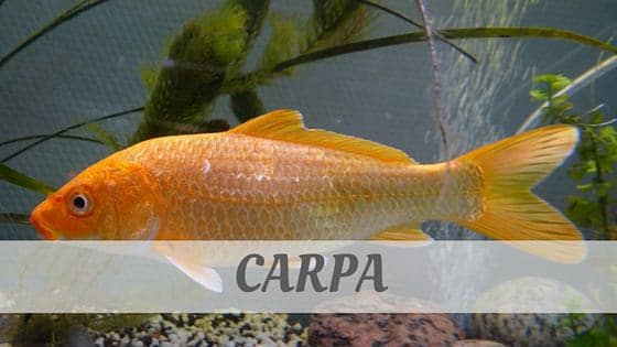 How Do You Pronounce Carpa?