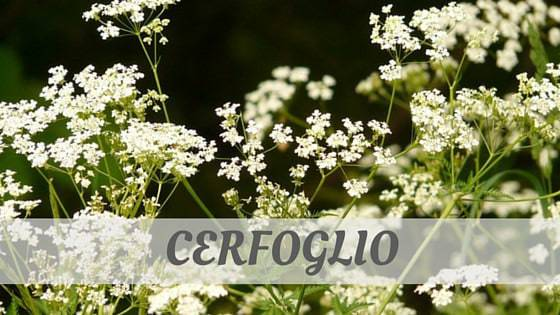 How To Say Cerfoglio?
