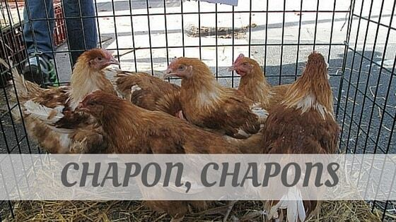 How Do You Pronounce How To Say Chapon, Chapons?