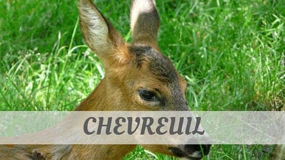How To Say Chevreuil?