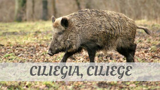 How To Say Cinghiale?
