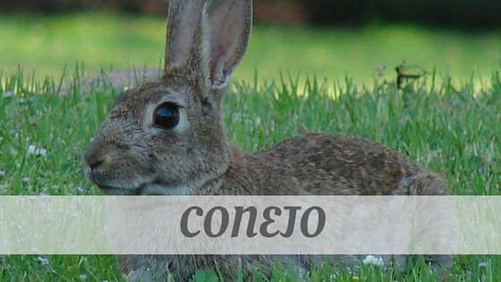 How To Say Conejo