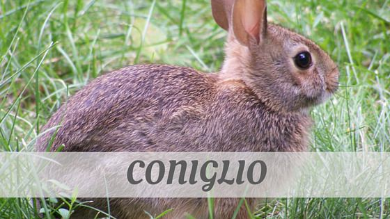 How Do You Pronounce Coniglio?