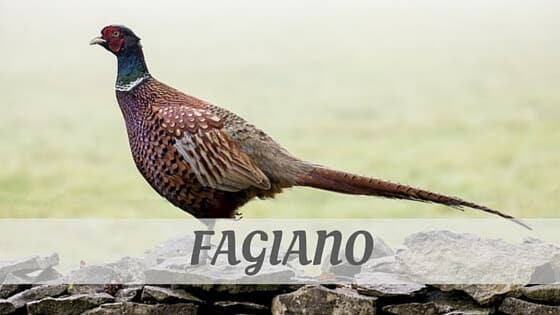 How Do You Pronounce Fagiano?