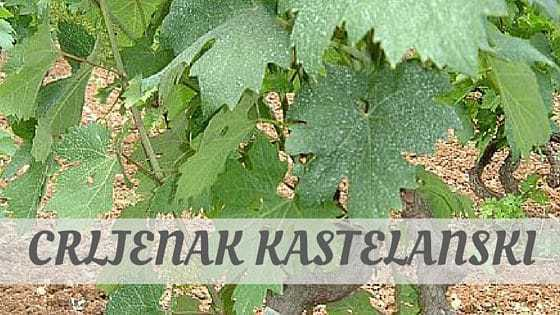 How To Say Crljenak Kastelanski